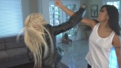 CF TAL 2 175x98 The Assassins Lesson from Catfight Fantasies